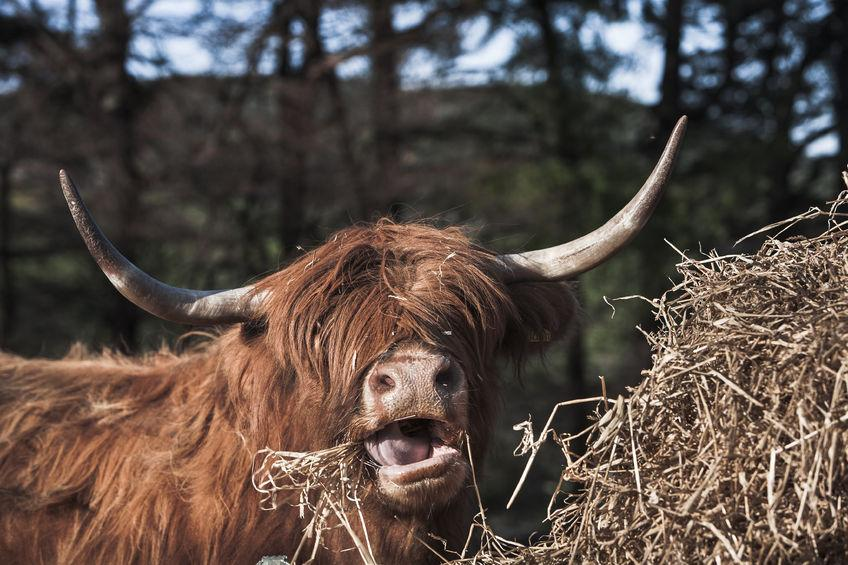 Scottish stakeholders used the meeting to seek solutions to the feed and fodder shortfall