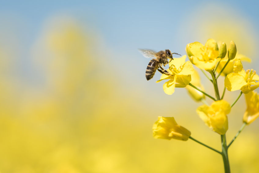 Findings suggest that bumblebees acquire a taste for neonicotinoids