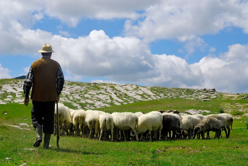The Farm Action Groups are for sheep and beef farmers looking to increase business