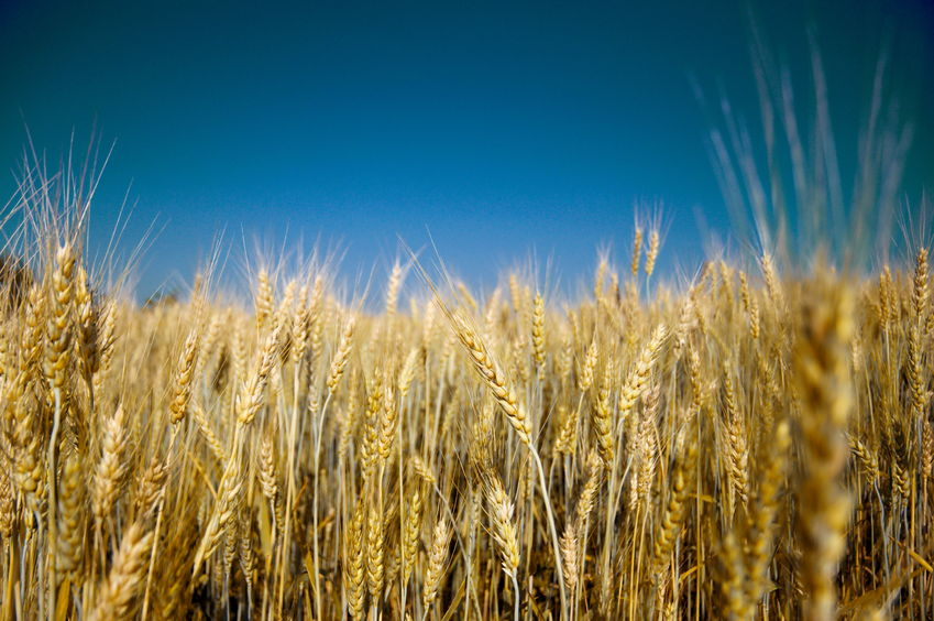 The Defra report says that crop production this year has been affected by the weather