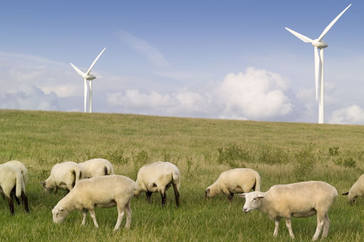 Top choices for farmers now planning to diversify include hosting renewable energy equipment on land