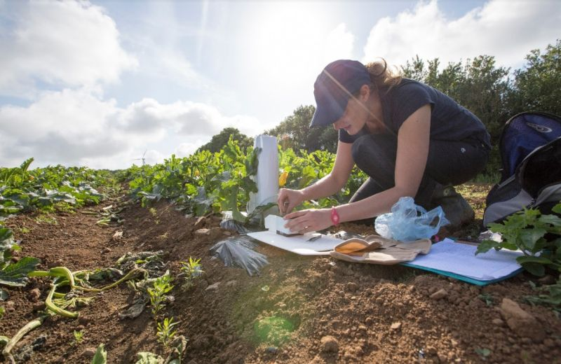 The research revealed the value of pollination services to courgettes