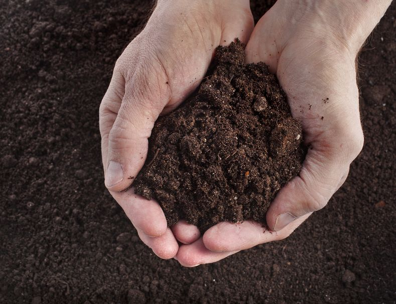 95% of the world's food comes from soil