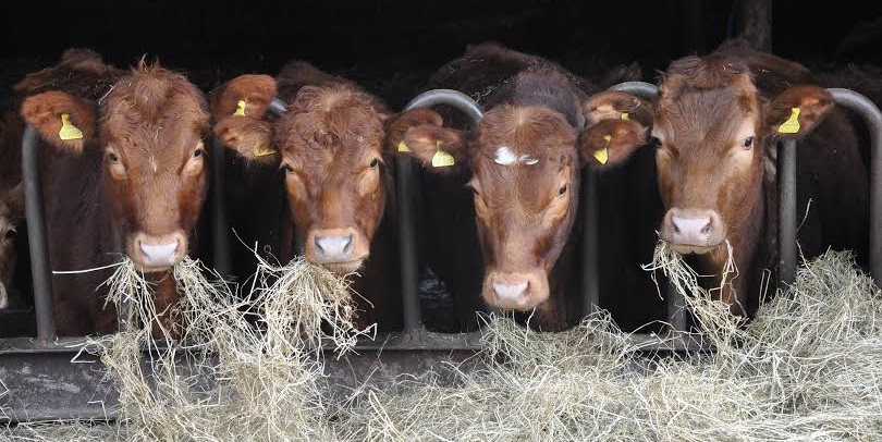 The eradication of BVD will lead to benefits such as lower production costs for farmers