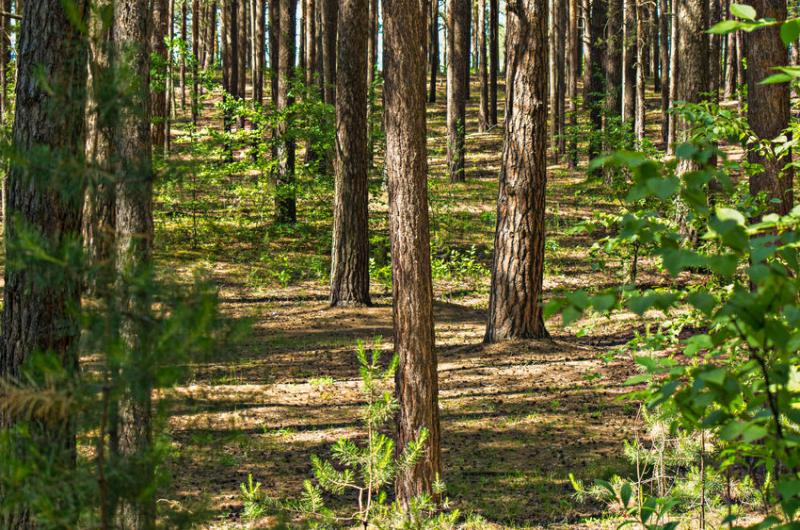 Trees and woodlands have the potential to recapture ammonia emissions