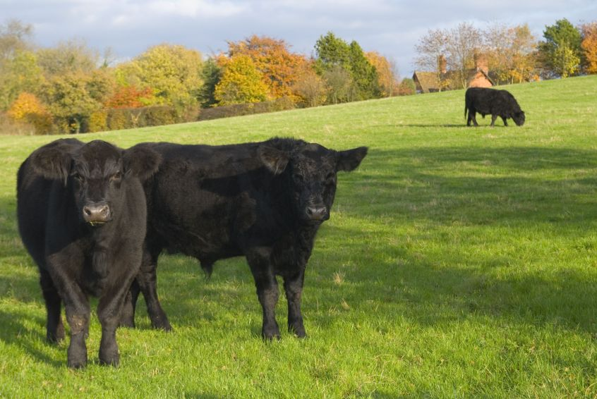 Beef prices are much lower than would have been hoped, NFU Scotland says
