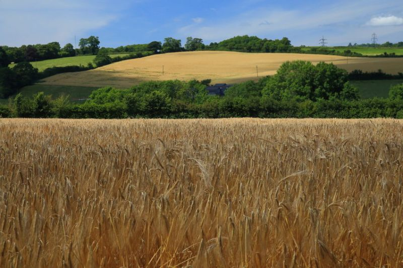 The NFU is concerned that this merger could add 'extra financial pressure' on arable businesses