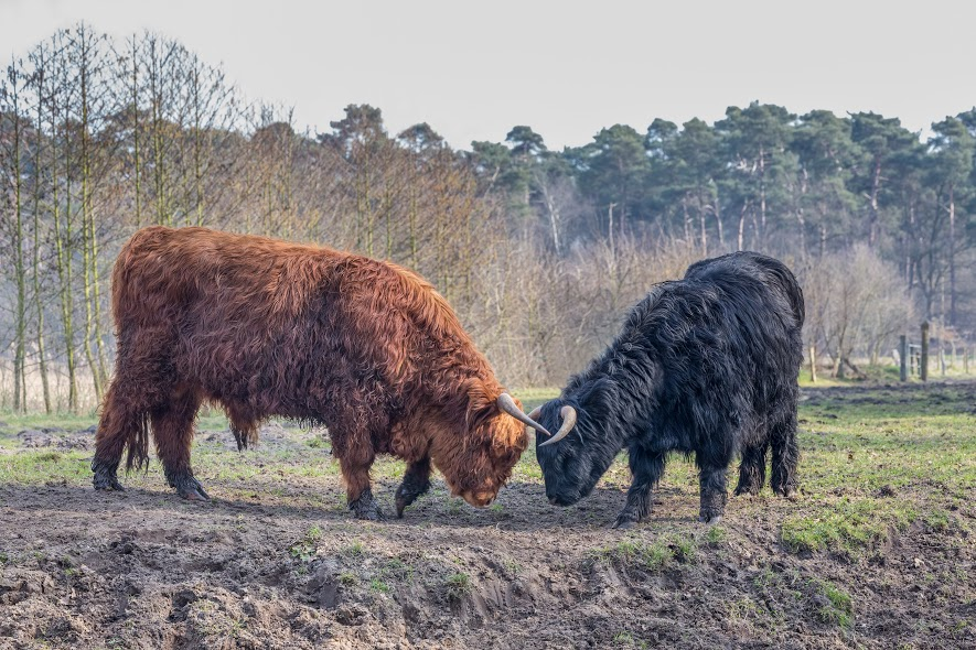The app seeks to 'unite sheepish farm animals with their soulmates'