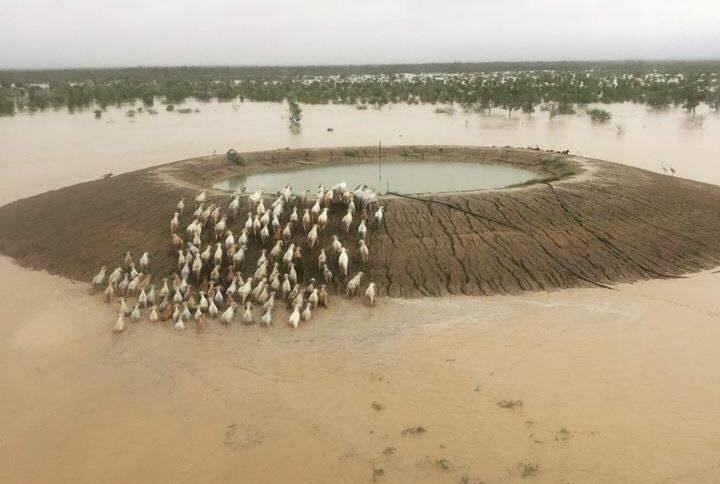 Queensland received three years' worth of average rainfall in a week (Photo: Queensland's Department of Agriculture and Fisheries)