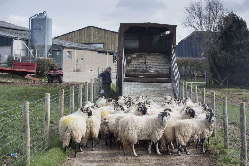 Farmers exporting animals and animal products to the EU will need to apply for an Export Health Certificate before they export (Photo: FLPA/Wayne Hutchinson)