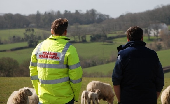 Officers found cattle grazing in areas littered with scrap metal