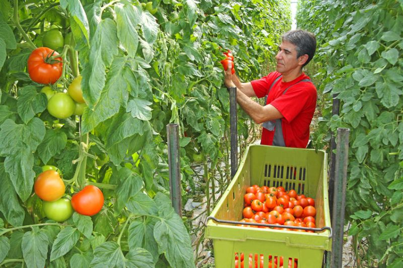 The first non-EU migrant workers will arrive on British farms this spring