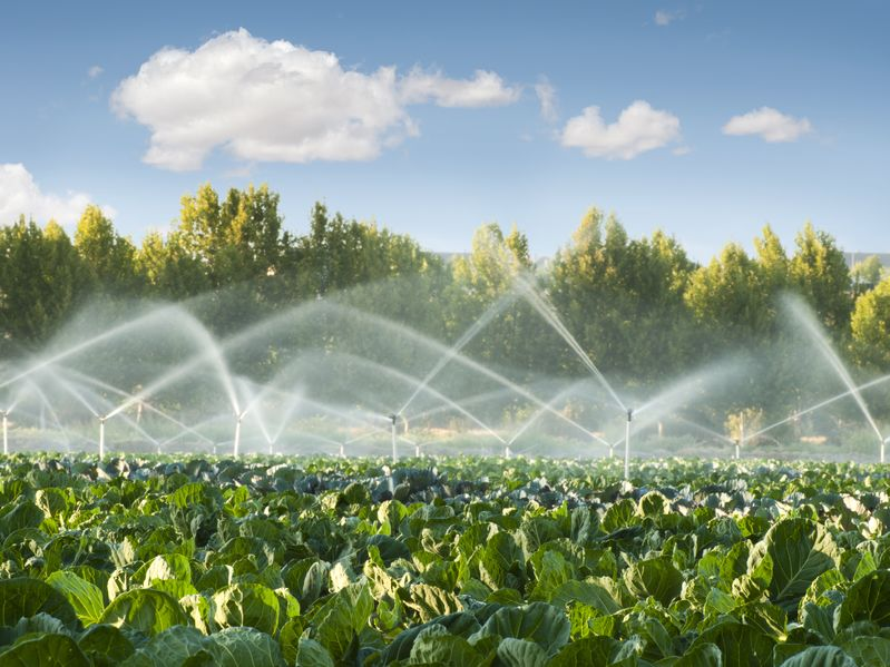 Water for food production should be equal in status to water for public supply, the CLA said