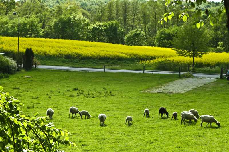 Powys County Council's Farms Estate is the largest of its kind in Wales and the fifth largest in the UK (Stock photo)