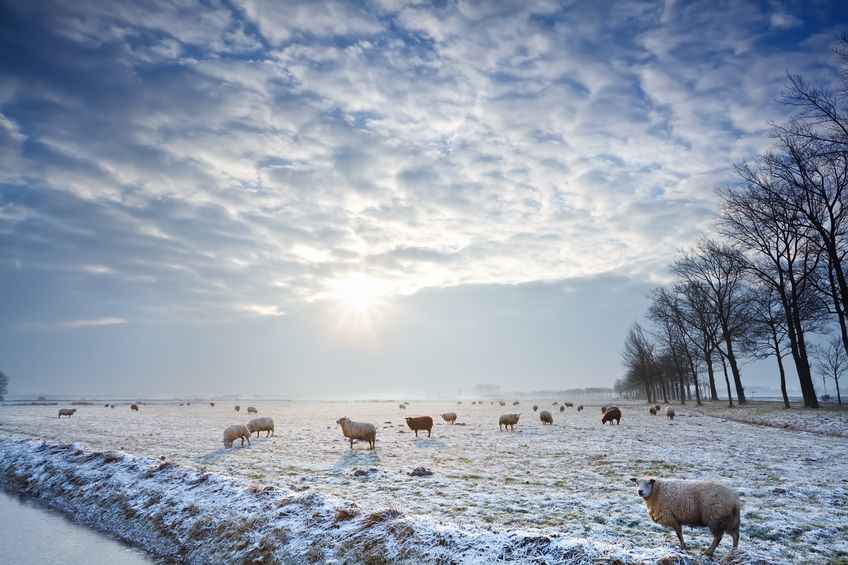Sheep farmers were the hardest hit because of the unpredictable weather of 2017-2018