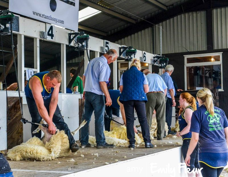 Competitive shearing became a huge part of Adam Berry's (L) life after securing 8 English National Circuit wins and 5 English National titles