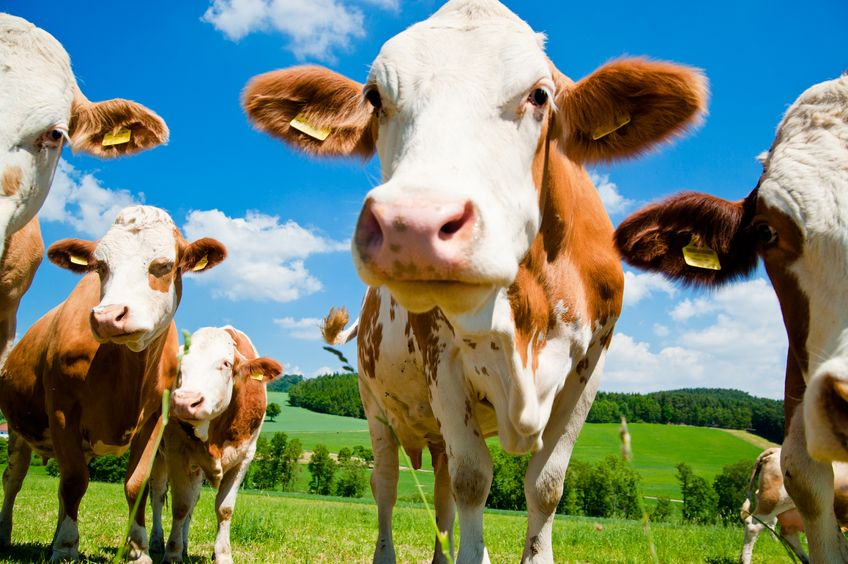 Beef and lamb prices must strengthen, says the Ulster Farmers' Union