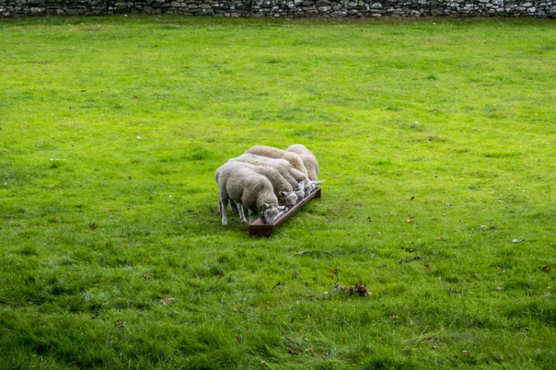 Figures show lowland cattle and sheep farms down a substantial 29%, with farm business income at just £17,000