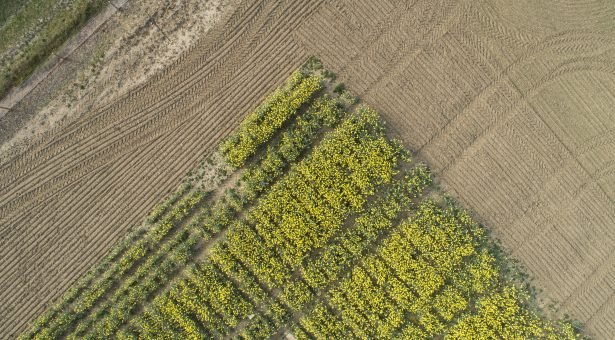 This mere 1-degree rise costs UK rapeseed growers £16m