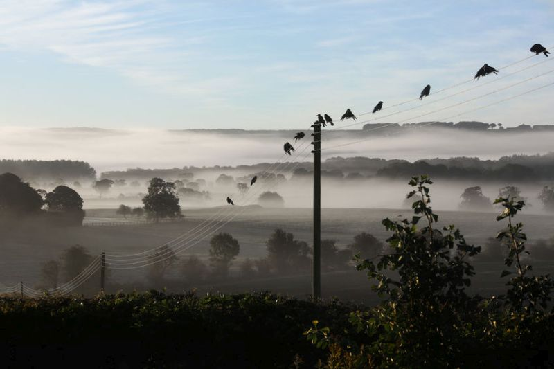 MPs are to question Defra and Natural England on the wild bird control issue