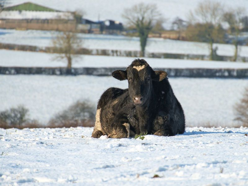 Challenging weather conditions affected the performance of the UK agricultural industry
