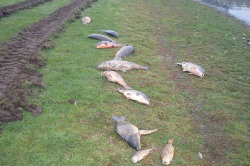 The incident killed a number of fish and impacted on groundwater