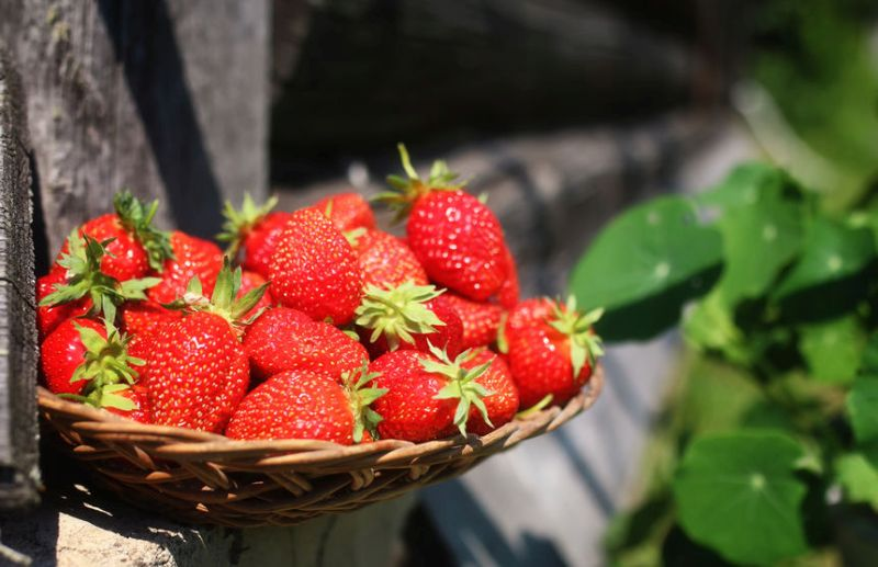 During the past year, more than 131,000 tonnes of strawberries were sold in the UK