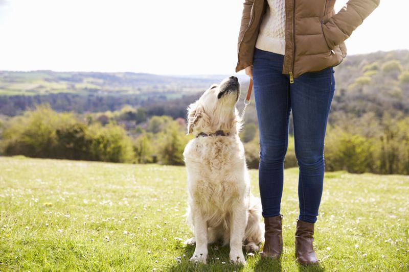 The dog-friendly diversification plan has been handed to Hambleton District Council