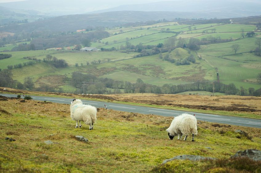 A survey has been launched to better understand the challenges Yorkshire farmers think they're going to come against post-Brexit