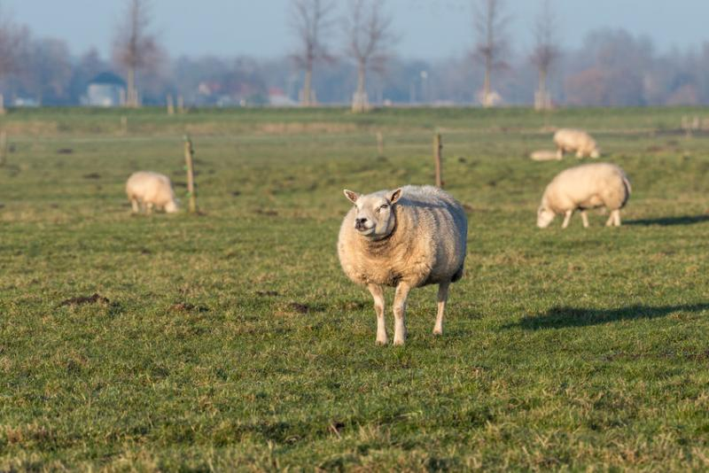 Sheep worth thousands have been stolen from the Moray farm