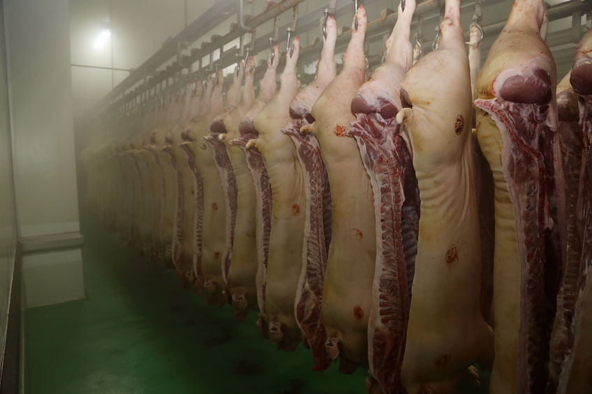 UK pork producers are suffering mounting debts as processors are pocketing millions, the NPA warns