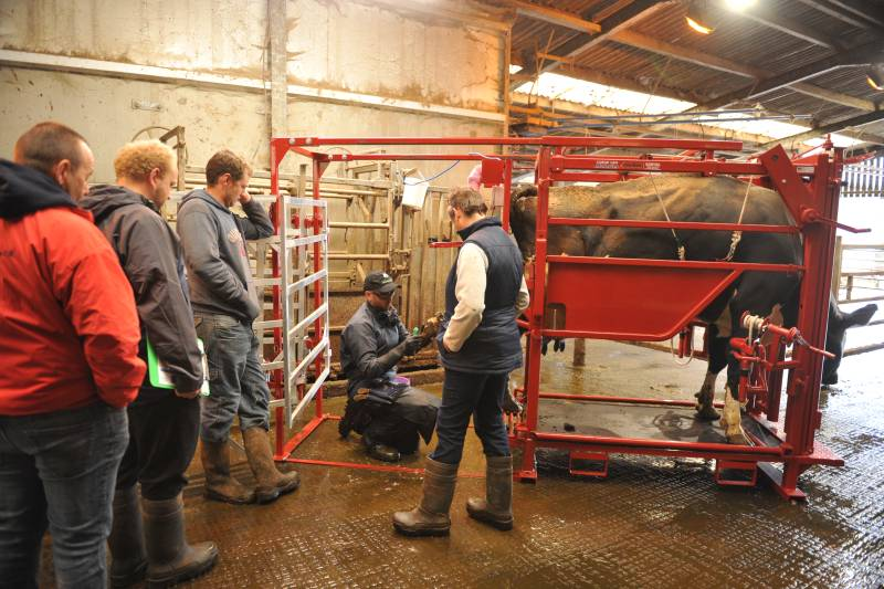 Experts delivered the advice as part of a Farming Connect Master Lameness course in Wales