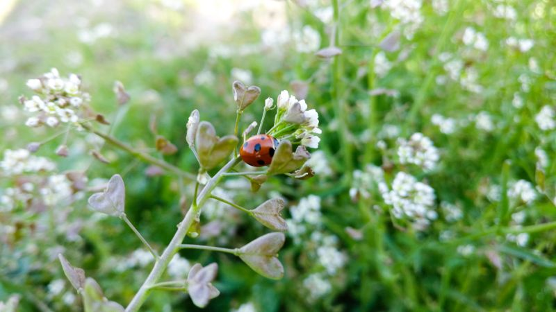 Researchers analysed a dataset to study the impact of the immediate landscape on the weeds in and around arable fields (Photo: H Metcalfe)