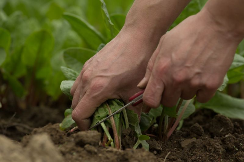 Farmers are seeing a significant labour shortage this year