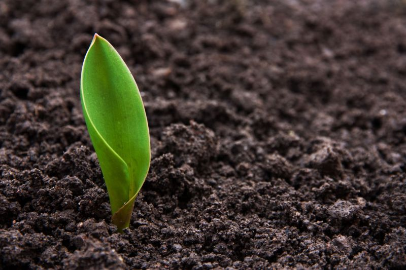 Britain's soil is the food production engine to fuel a growing population