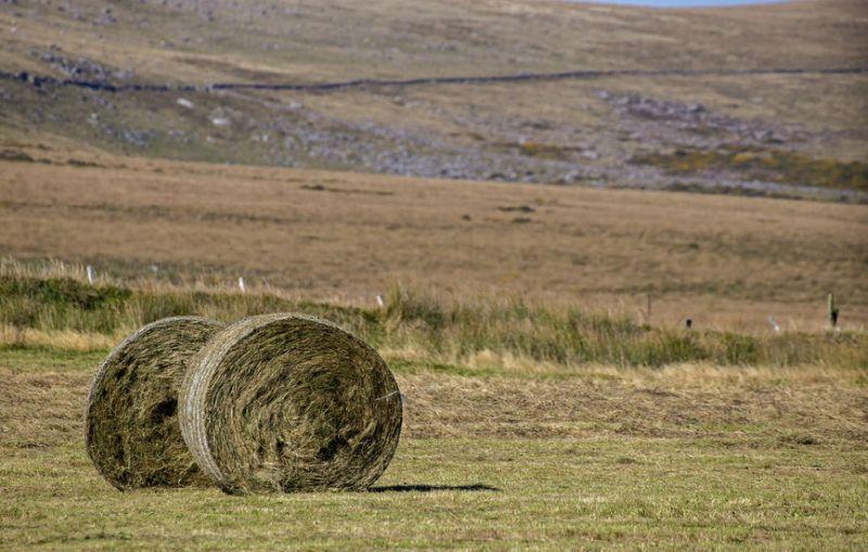 Total returns to the farmer averaged £375/ha in 2018