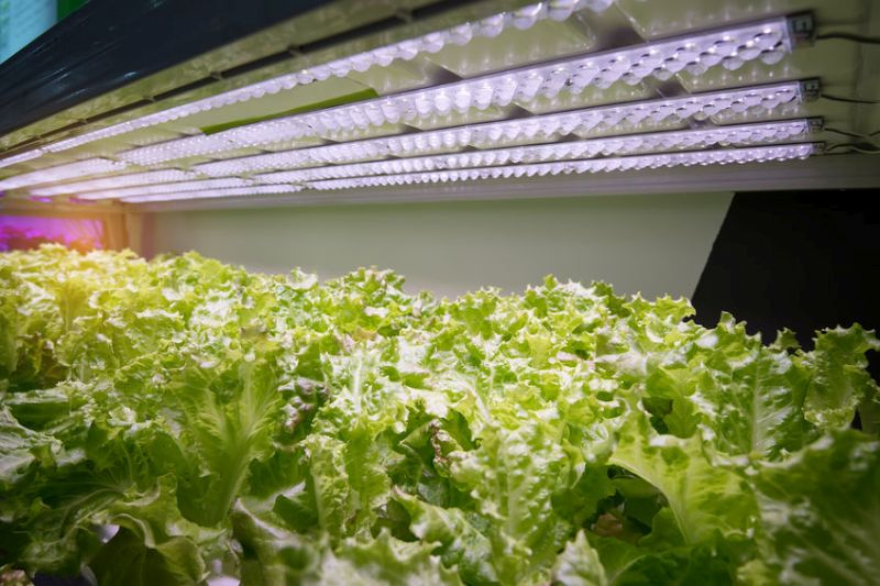 Ocado is investing in vertical farm technology so it can grow produce nearer its operations