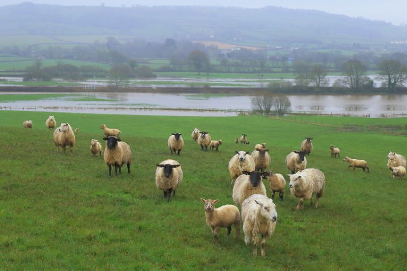 Agriculture 'must not be ignored' when it comes to the increasing flood risk in the UK