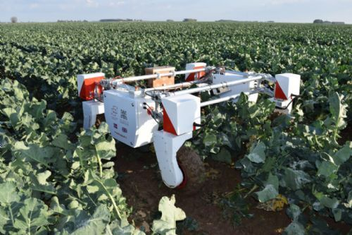 The project will look at how robots can tend, harvest and quality control high-value crops with minimum human intervention