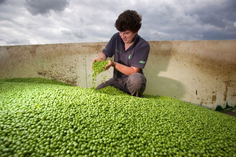 The UK is 90% self-sufficient in pea production, new figures show ahead of the week-long initiative