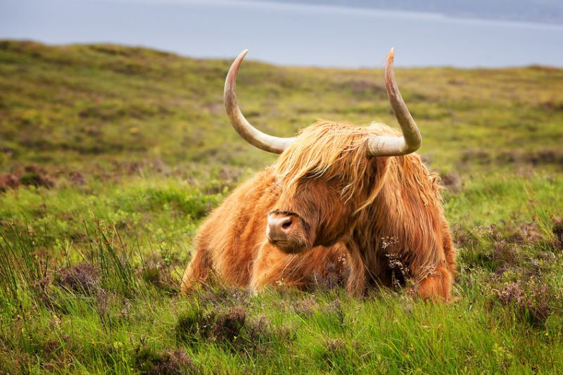 The aim of the campaign is to increase public awareness of Scottish red meat industry