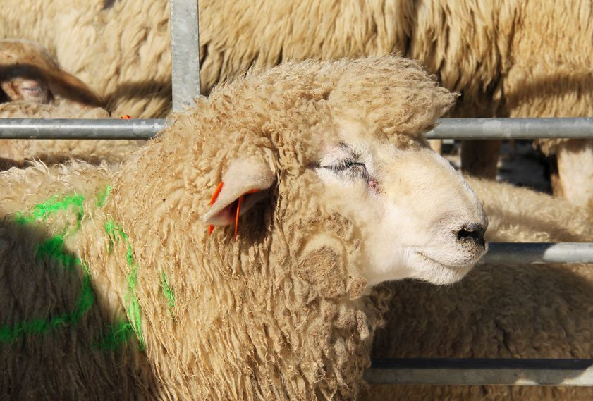 Sheep farmers say a range of different market options are needed to help provide resilience against volatility