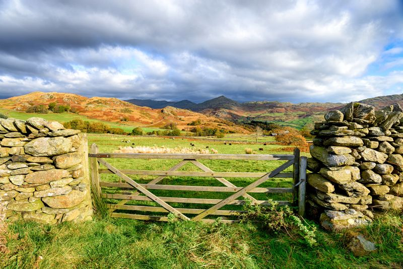 Nearly half of the land farmed in England under an agricultural tenancy is through a Farm Business Tenancy
