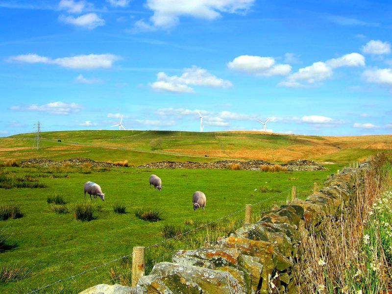 The NFU calls for measures such as capturing more carbon on farmland and boosting land-based renewables