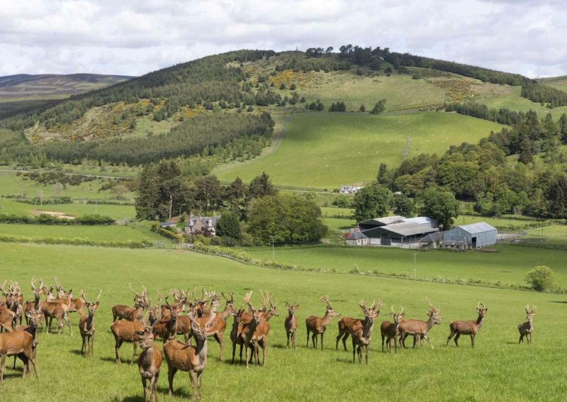 The deer enterprise was established in 2004 and has since grown to its current size of 200 breeding hinds (Photo: Savills)