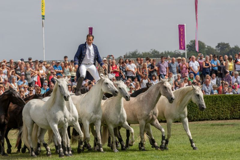 The Great Yorkshire Show attracts more than 130,000 visitors