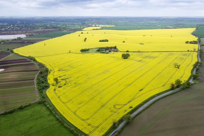 Due to poor establishment in the dry autumn, followed by cabbage stem flea beetle damage, OSR area has been reduced to the lowest level since 2003