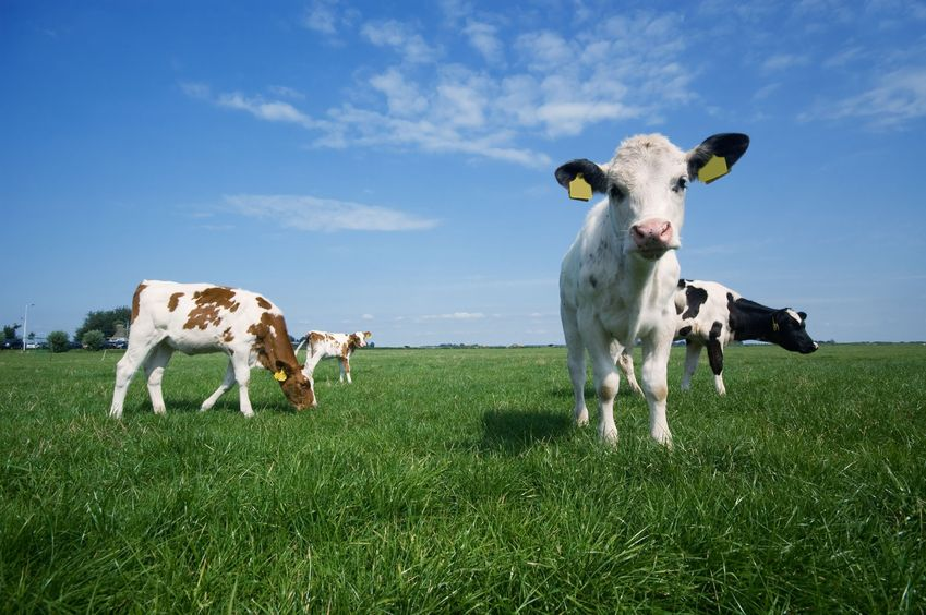 Created in the US, trials have shown that vaccinating cattle reduced mortality by nearly 40%