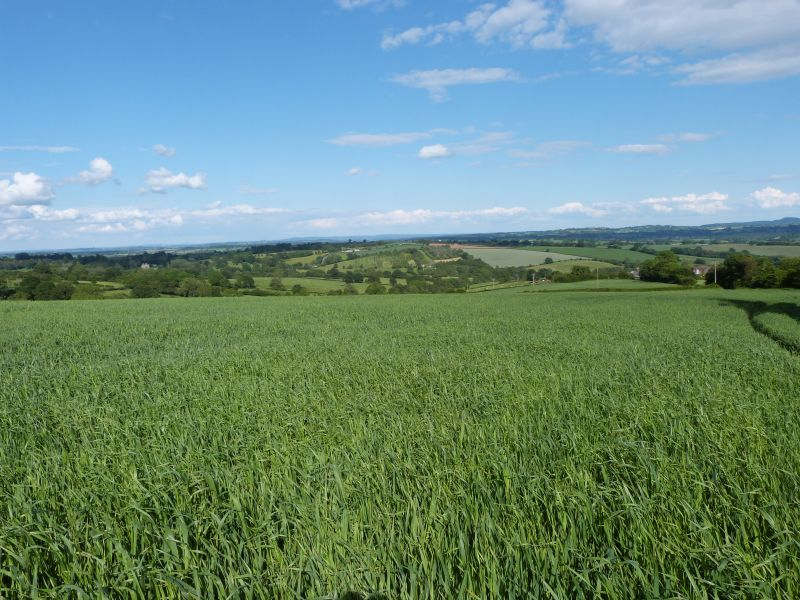 Earls Ditton Farm offers an opportunity for someone looking to purchase pasture or arable land