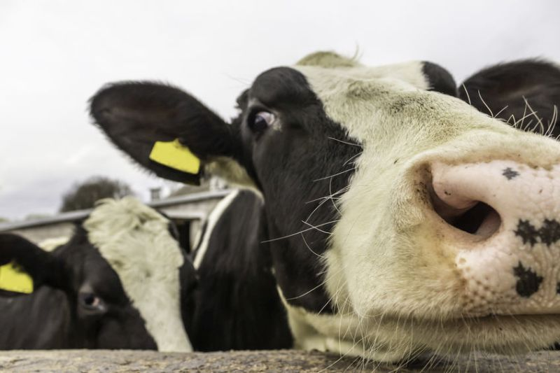 The Welsh dairy farmer pleaded guilty to numerous offences including breaching TB regulations